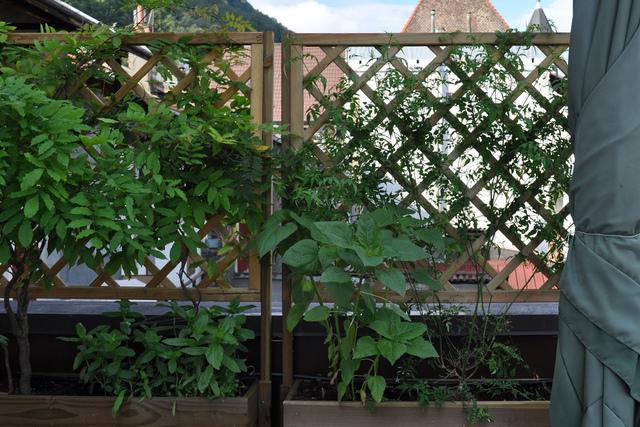 comment aménager sa terrasse avec une plante grimpante chevrefeuille