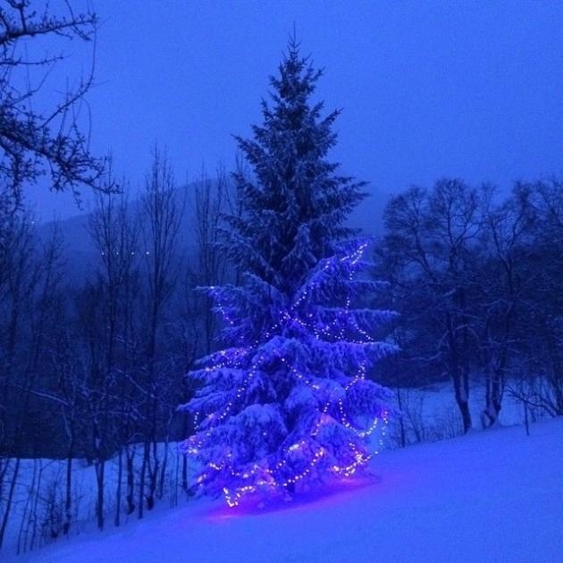 Sapin de noel geant alpes clemaroundthecorner.com outdoor christmas tree.