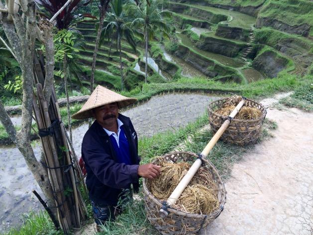 paysan bali riziere Tegalalang Rice Terrace
