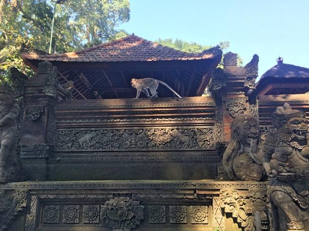 monkey forest ubud singe temple bali