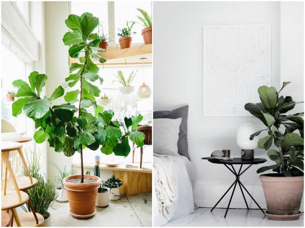 plante géante intérieur blanc