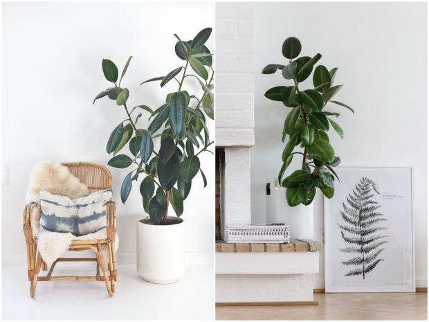 intérieur scandinave cheminée plante choisir sa plante d'intérieur