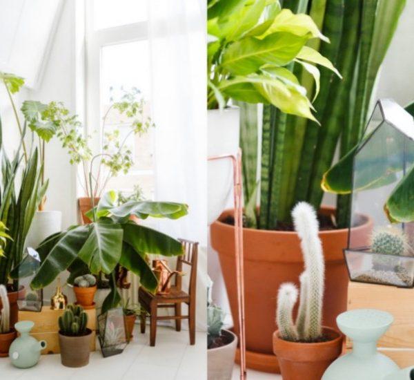 choisir sa plante d'intérieur cactus