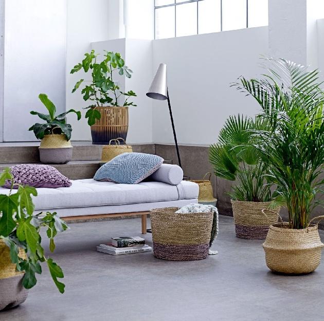 décoration jungle scandinave salon