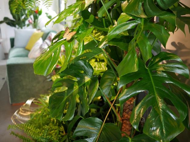 salon decoration tendance jungle