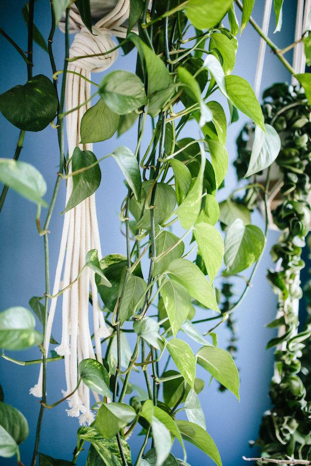 les plantes dégoulinent du pot suspendu en corde macramé