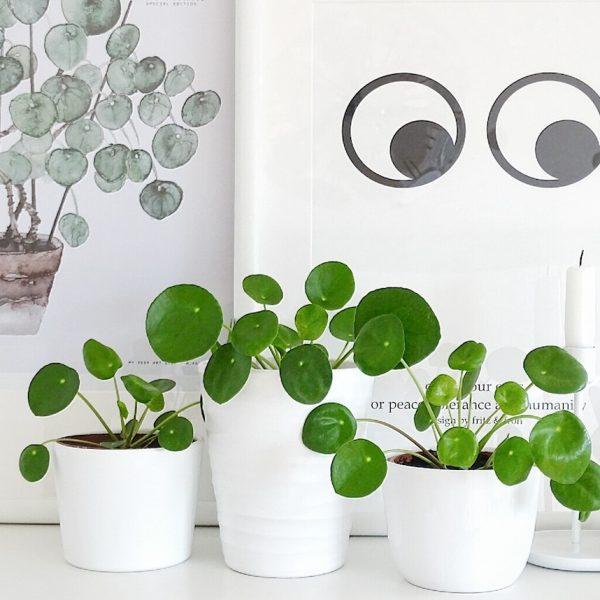 salon scandinave panier rotin et plante pilea peperomiodres