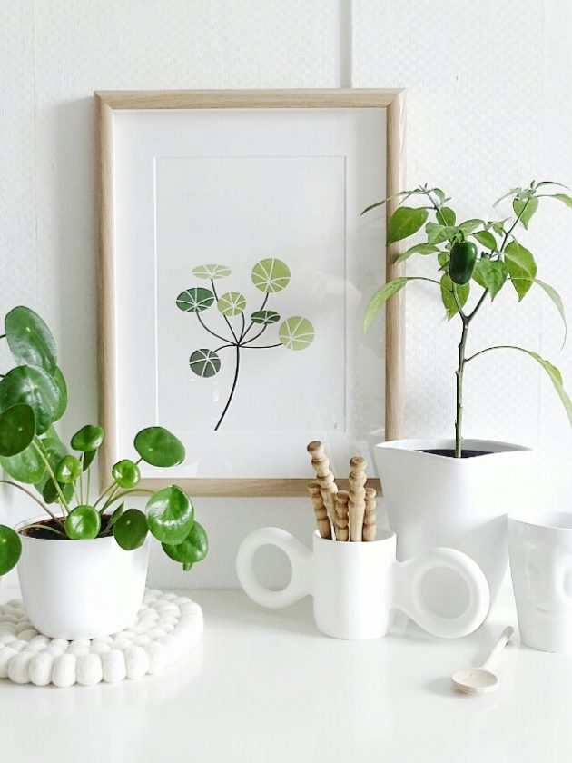 dessin pilea peperomioides decoration blanche etagere salon