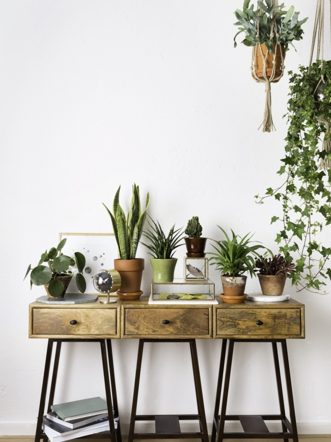Créer une ambiance cosy chez soit en invitant la nature et en créant une accumulation de plantes vertes et de cactus