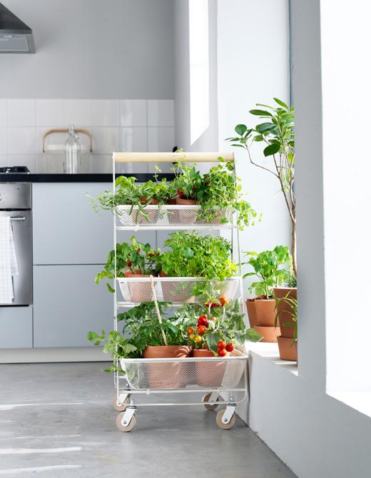 etagere pour plantes aromatiques jardiner en appartement