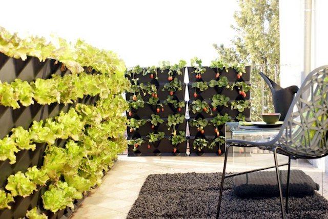Jardiner En Appartement Potager Interieur Et Faire Pousser Des