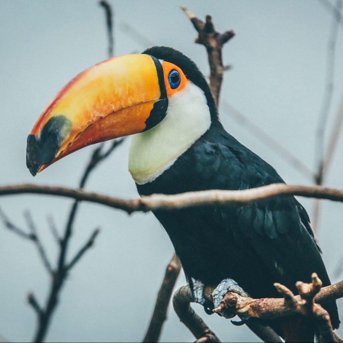 déco toucan sur les chutes d iguazu bresil argentine