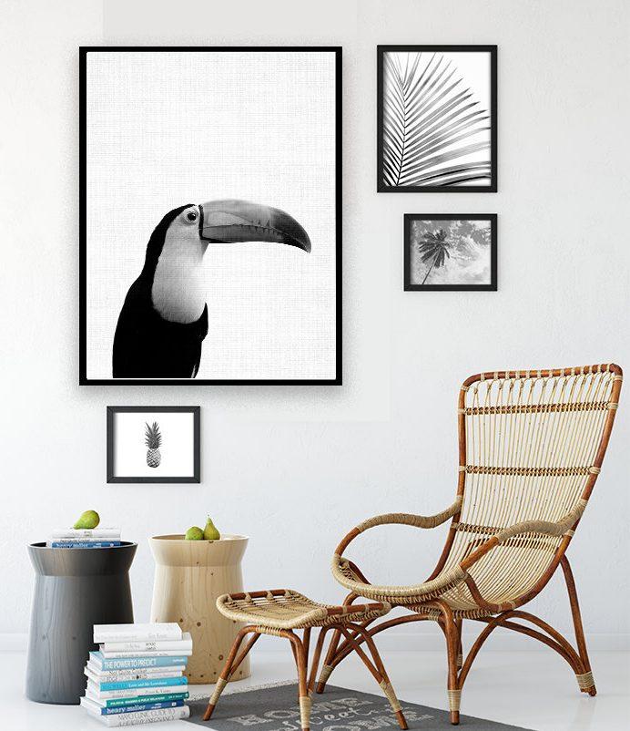 déco toucan affiche photographie blog noir et blanc