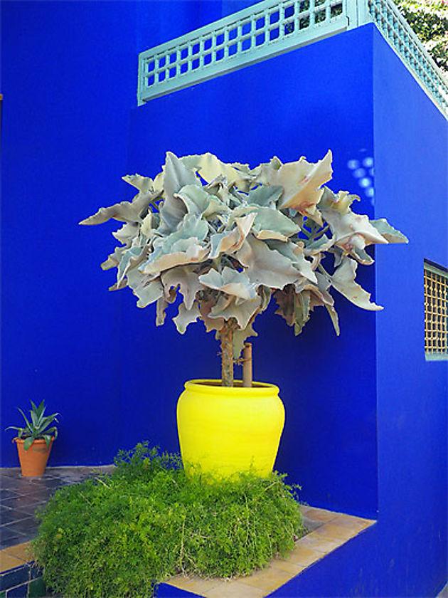 déco fluo jardin façade maison bleu électrique roi