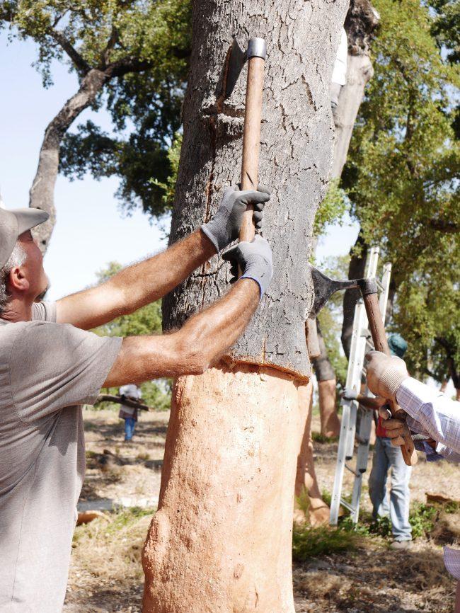 Suberaie récolte chêne liège déco foret Portugal
