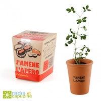 plante a pousser