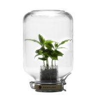 serre autonome jar cafeier pikaplant