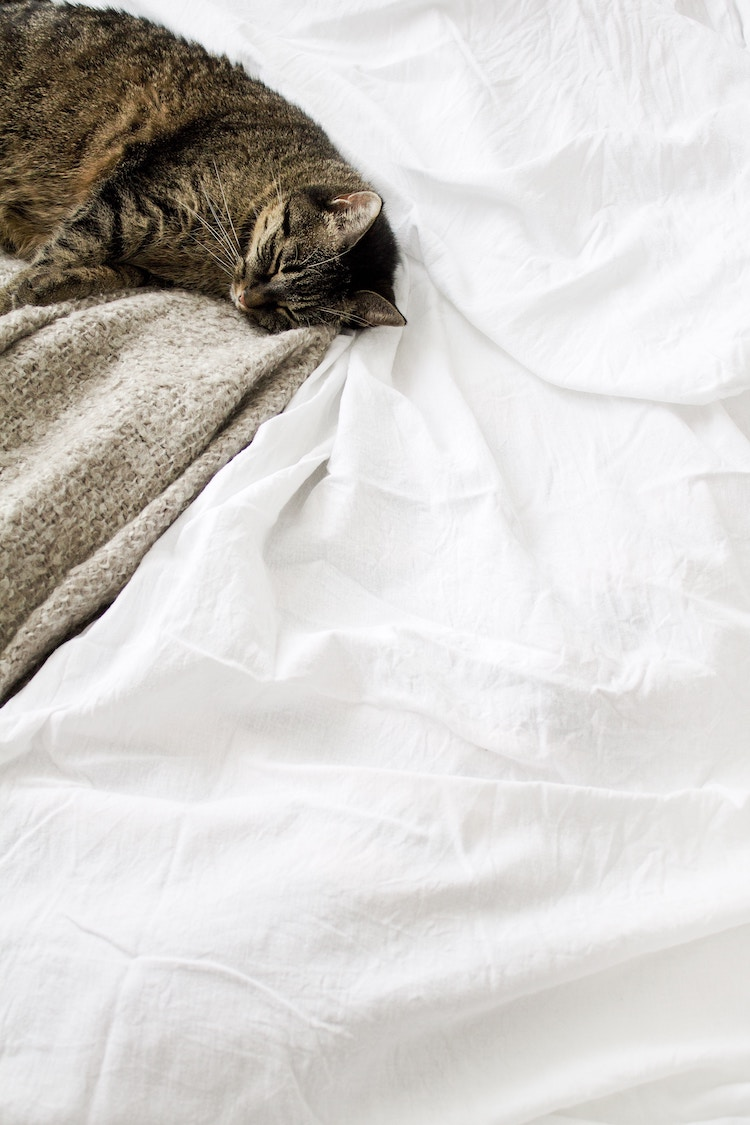 dormir chat lit trentenaire