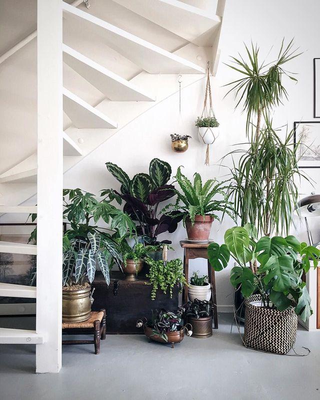 foret tropical accumulation plantes aménager un dessous descalier