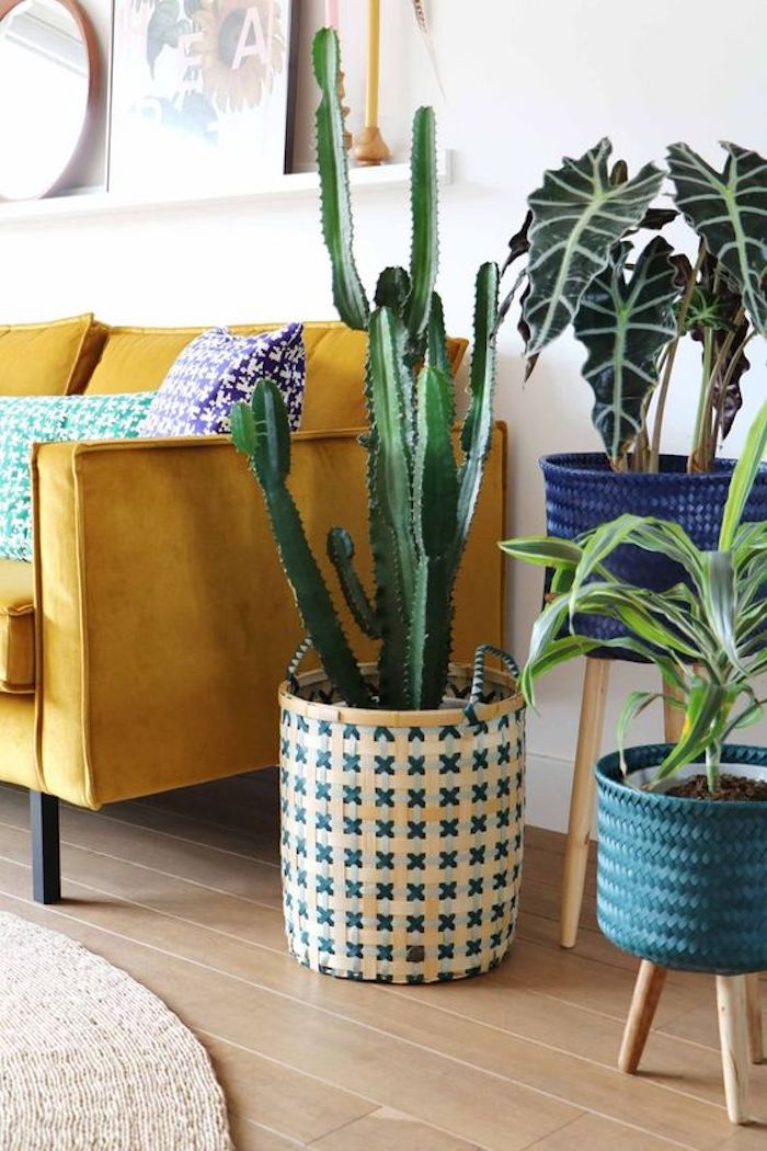 maison californienne jaune canape salon cactus plantes verte ficus urban jungle