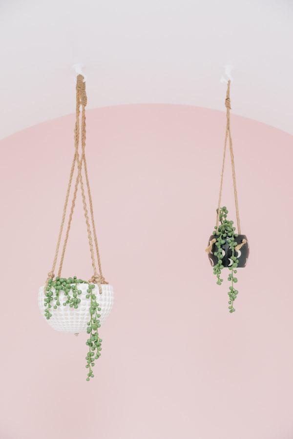 plante suspendue mur rose sunset à san francisco blog déco clemaroundthecorner