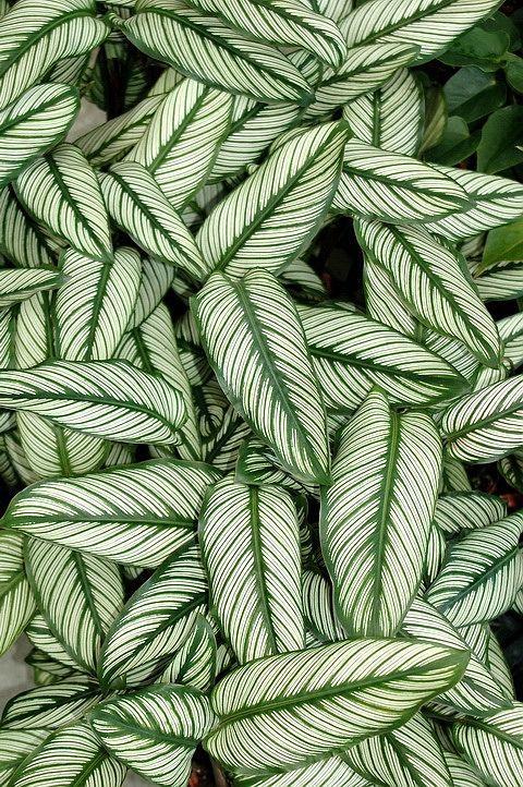 nuance de vert nature feuille cholorophile