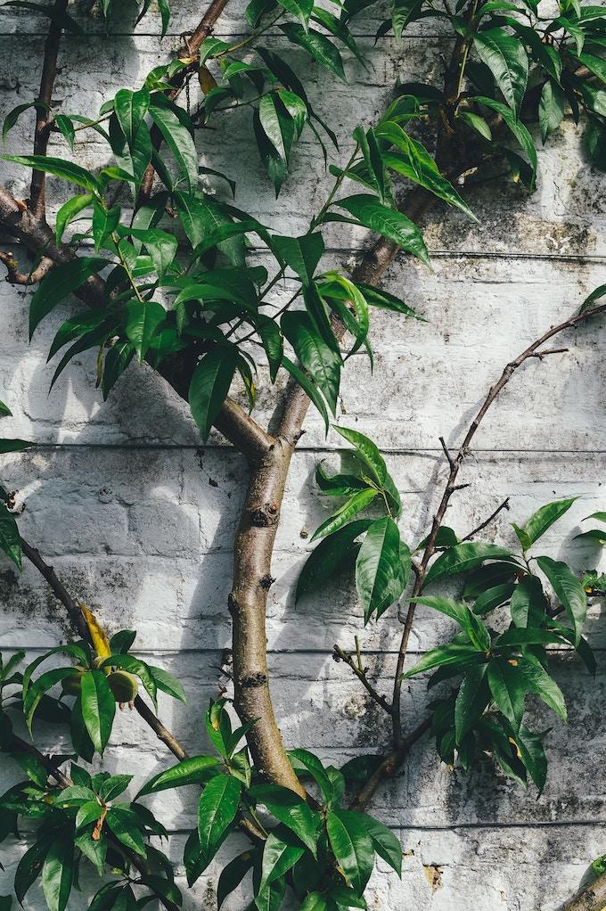 clôturer son jardin mur béton parpaing blog déco clemaroundthecorner
