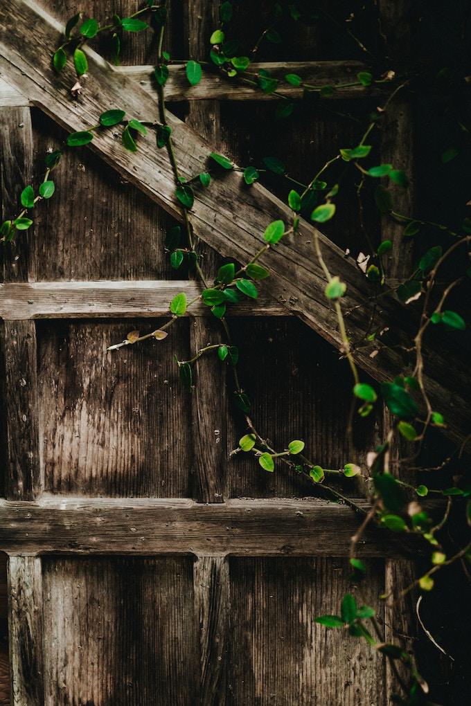 clôturer son jardin astuce conseil mur végétal blog déco clemaroundthecorner
