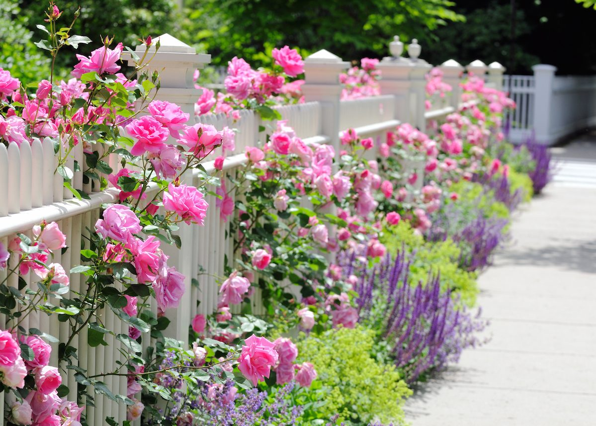 clôturer son jardin astuce conseil autorisation loi blog deco clemaroundthecorner