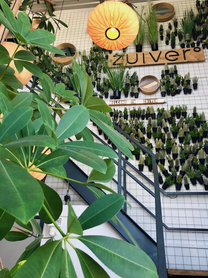 zuiver design hollandais meubles mur végétal cactus suspendu palmier escalier loft - Blog déco - Clem Around The Corner