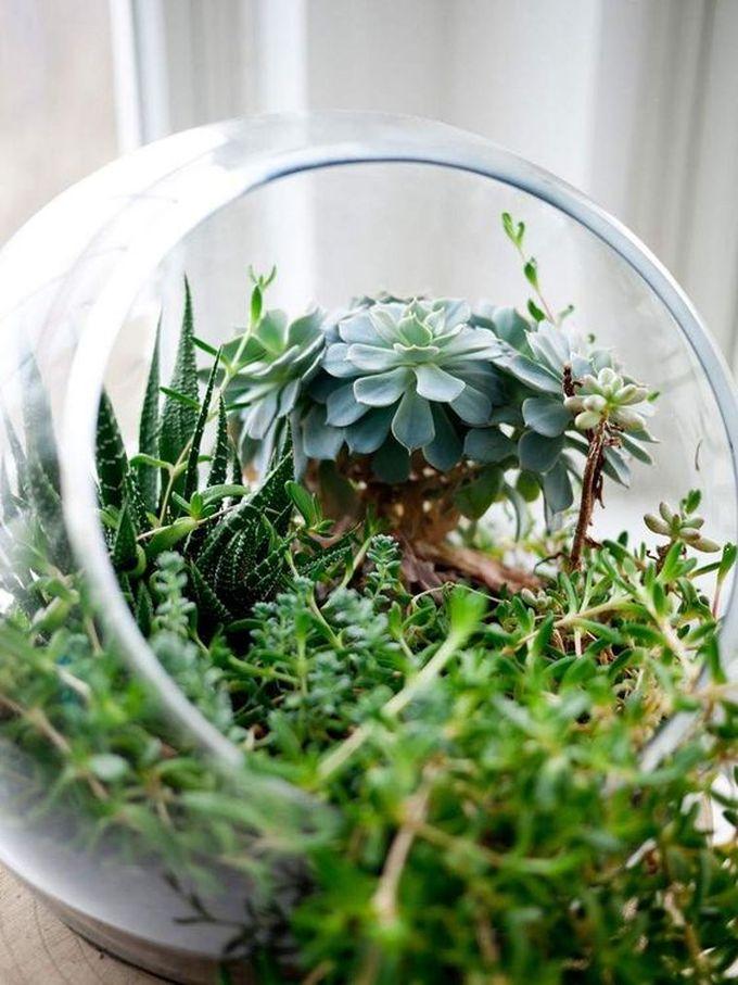 noël écologique décoration jardin en bouteille bocal écosystème végétal blog déco clem around the corner