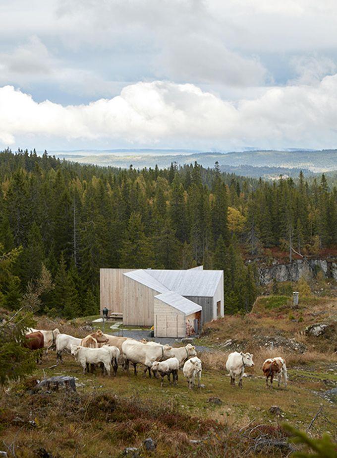 chalet design en norvège mi saison vaches troupeau montagne blog déco clem around the corner
