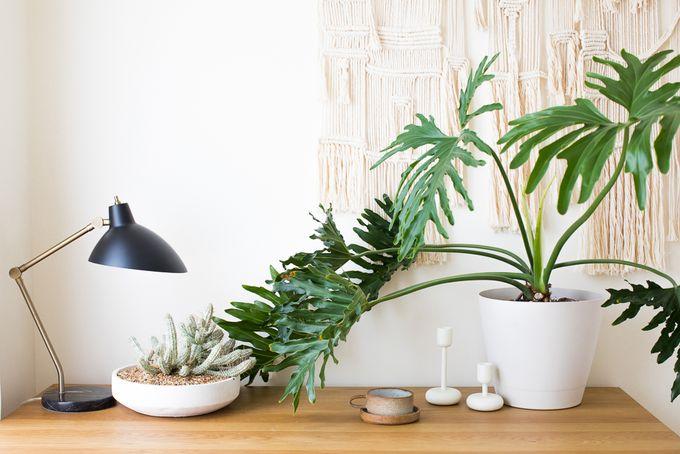 petit appartement minimaliste meubles plantes décoration objets blog déco clem around the corner