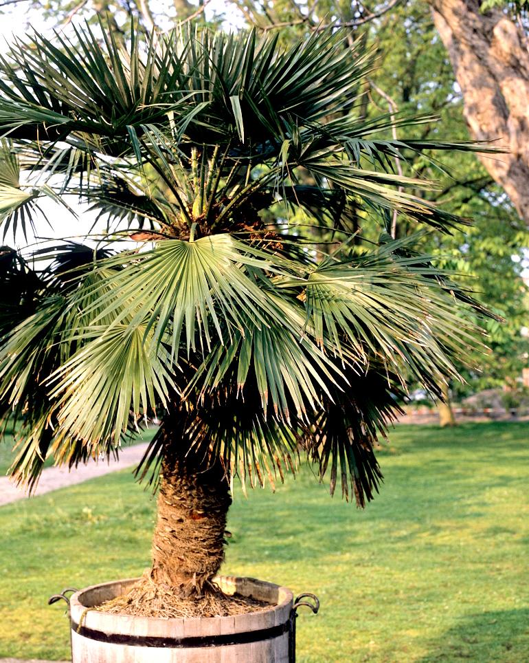 plantes balcon exposition sud palmier chanvre - blog déco - clem around the corner
