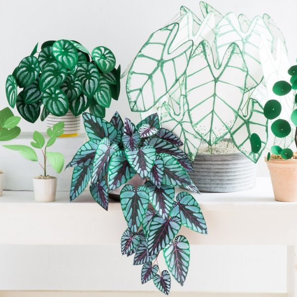 plante en papier monstera feuilles vert couleurs cover - blog déco - clem around the corner