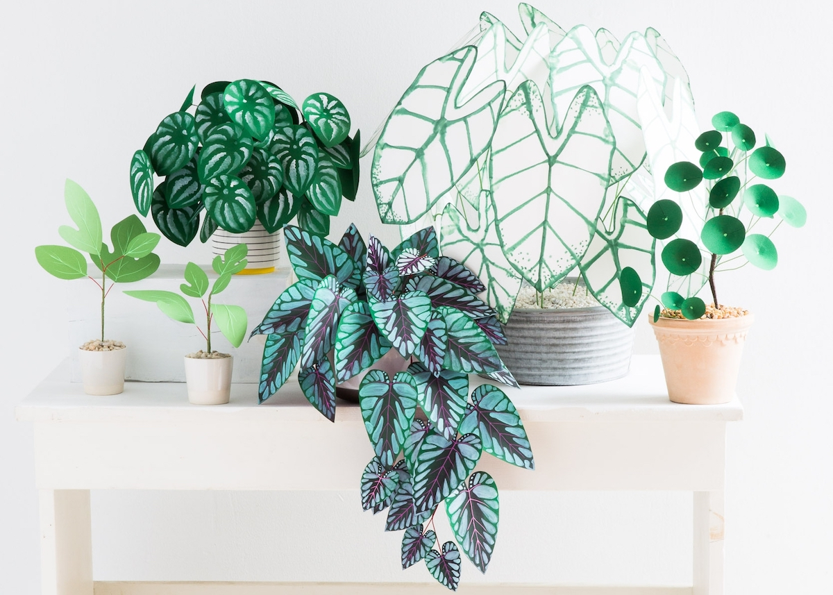 plante en papier monstera feuilles vert couleurs cover - blog déco - clem around the corner