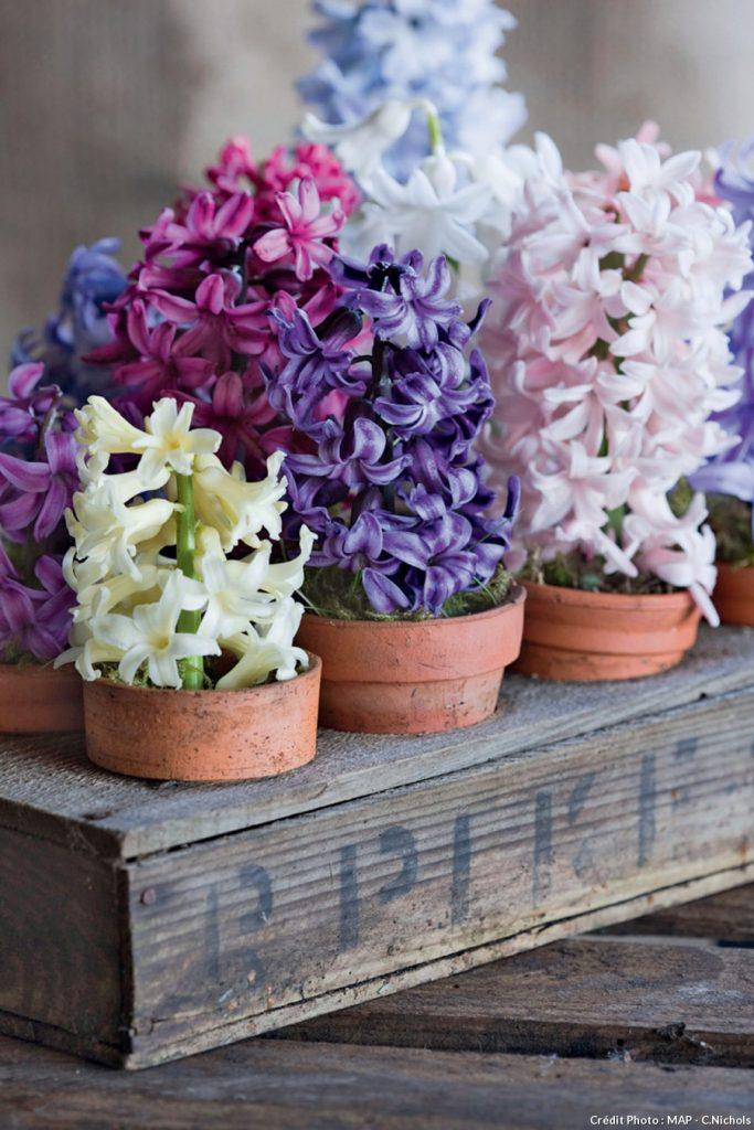 plante balcon ouest jacinthe pot fleurs bois terrasse - blog déco - clem around the corner
