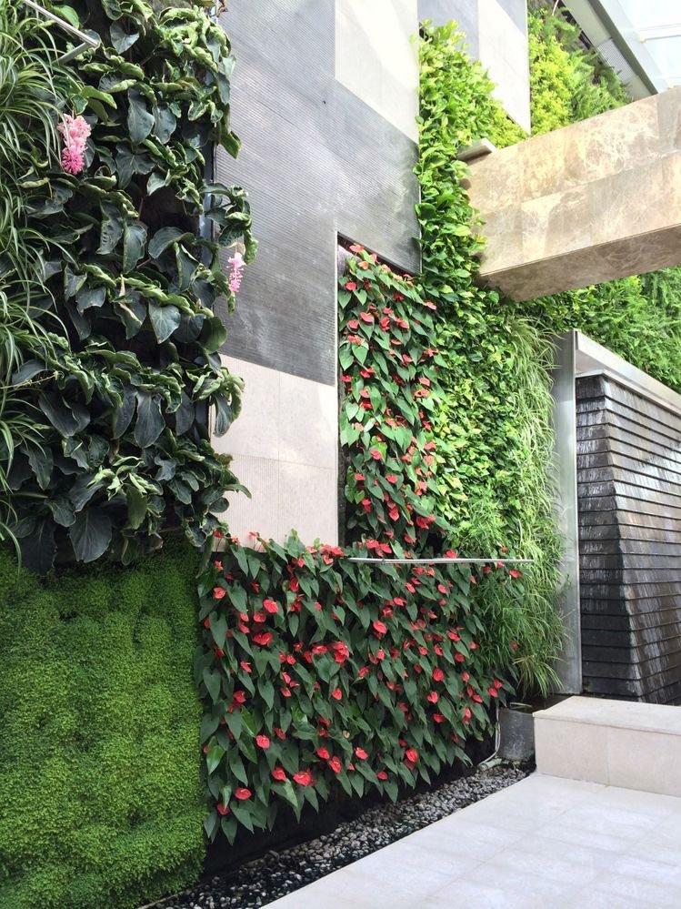 plante balcon ouest camélia mur végétal feuille - blog déco - clem around the corner