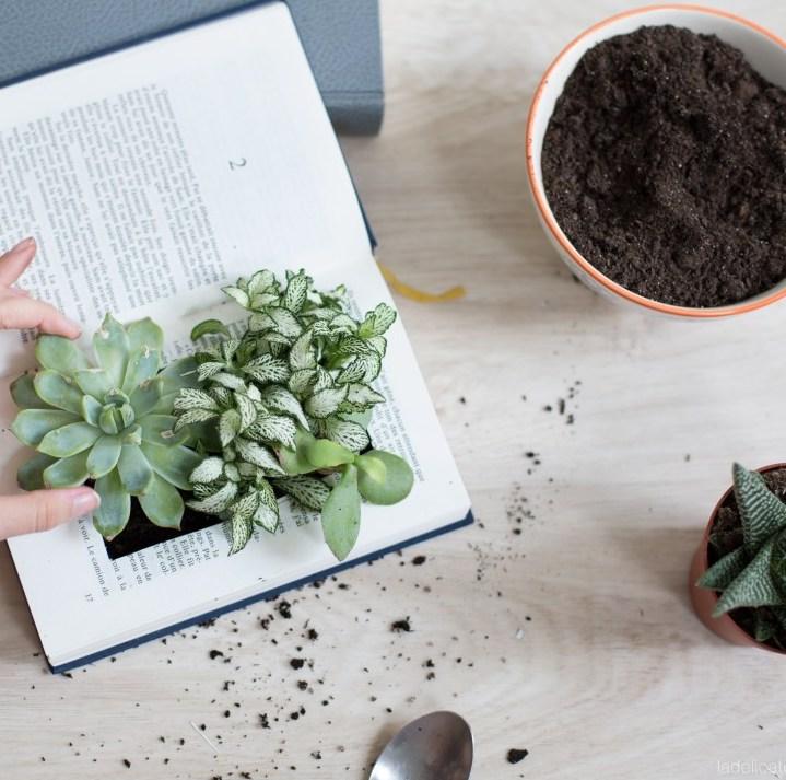 idée déco récup livre plante grasse - blog déco - clem around the corner