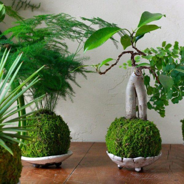 idée décoration végétale arbres plante verte forêt mousse green urban jungle