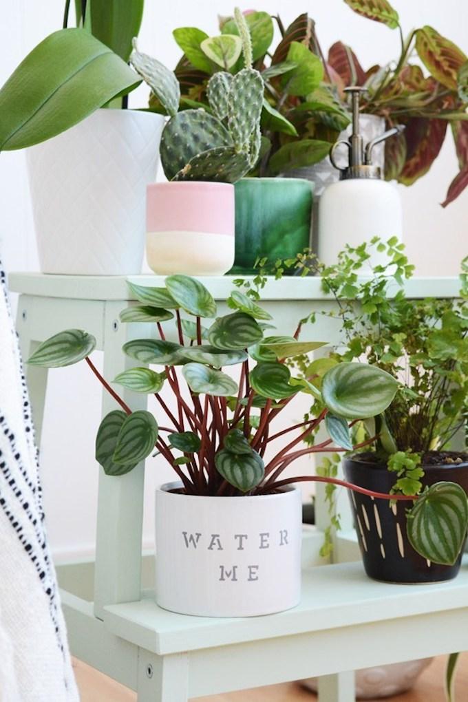 marche pied ikea tabouret pour plante vert jade pot de fleurs blanc noir - blog déco - clem around the corner