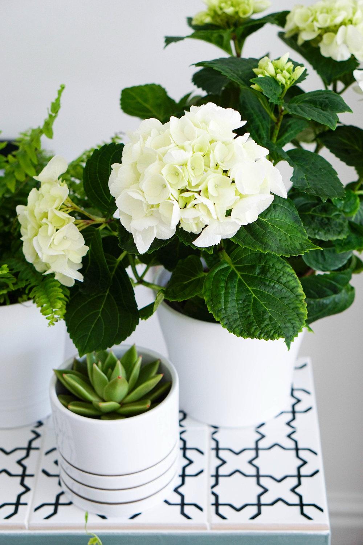 marche-pied ikea hack étagère pour plante carrelage blanc cactus fleurs blanches pastel - blog déco - clem around the corner