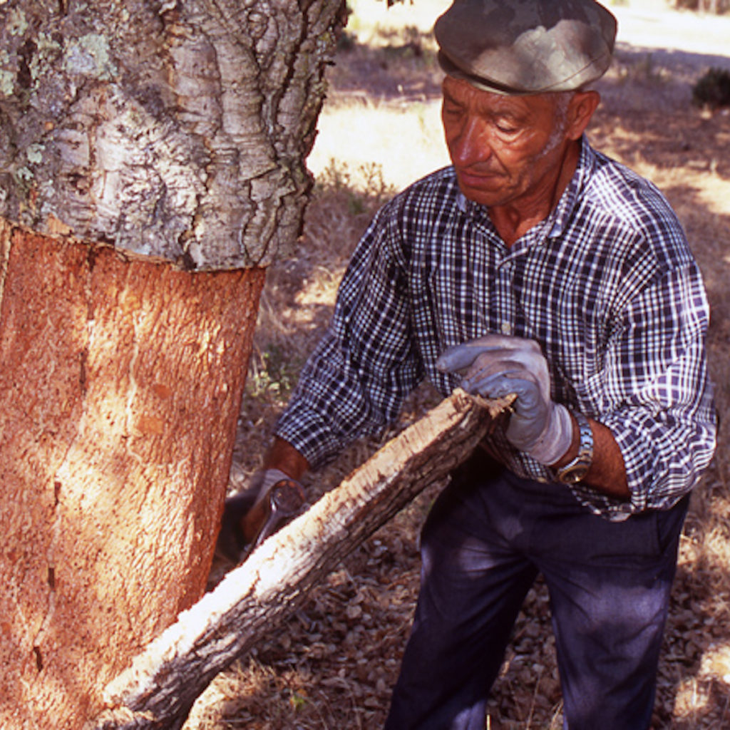Écorce processus extraction du liège arbre composant naturel sol revêtement amorim