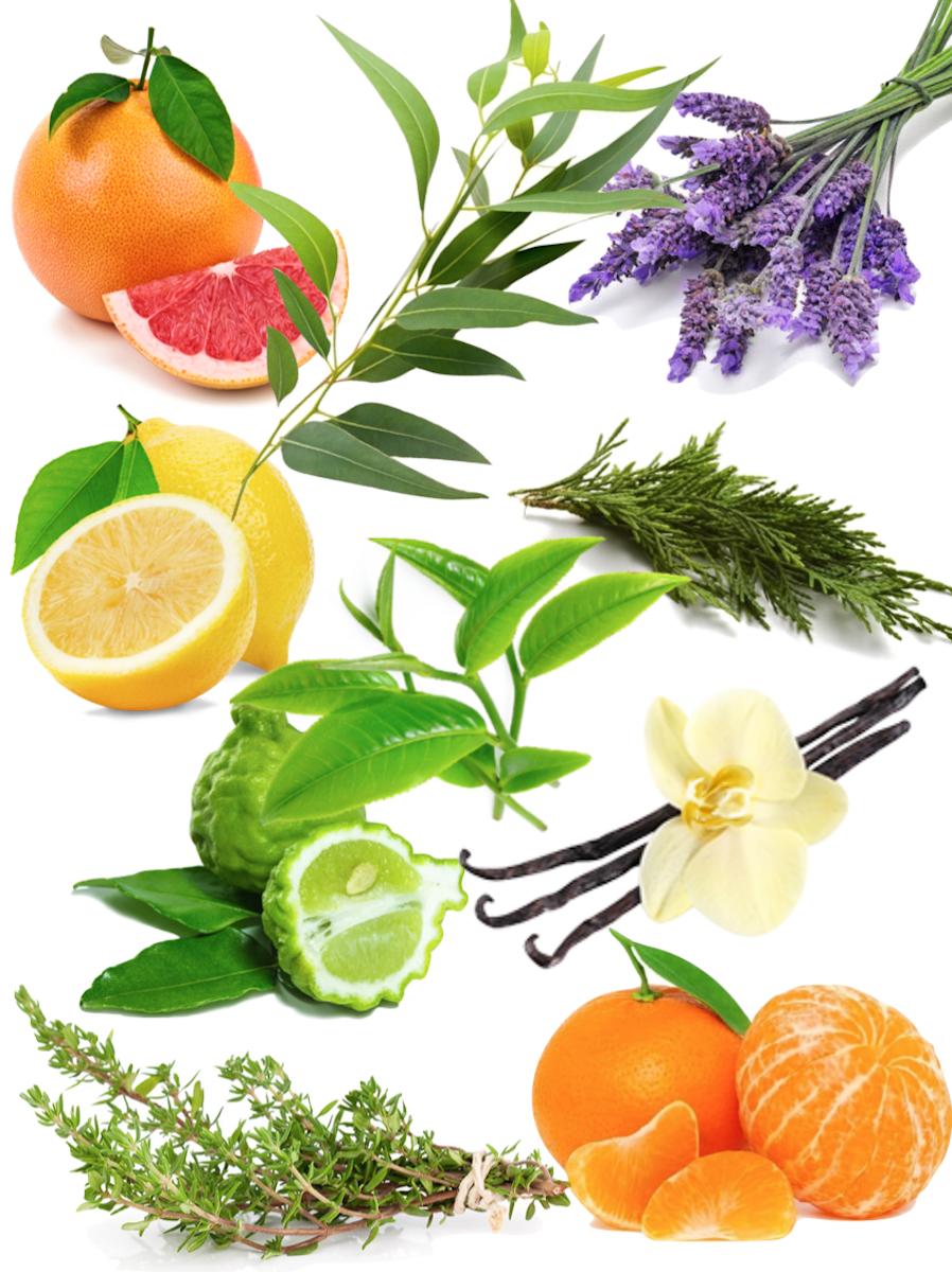 huiles essentielle pour diy bombe de bain bio citron cyprès vert lavande mandarine pamplemousse tea tree - blog déco - clemaroundthecorner