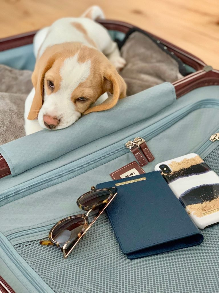 valise delsey beagle chiot etuis passeport Ideal Of Sweden coque Iphone lunette de soleil clemaroundthecorner