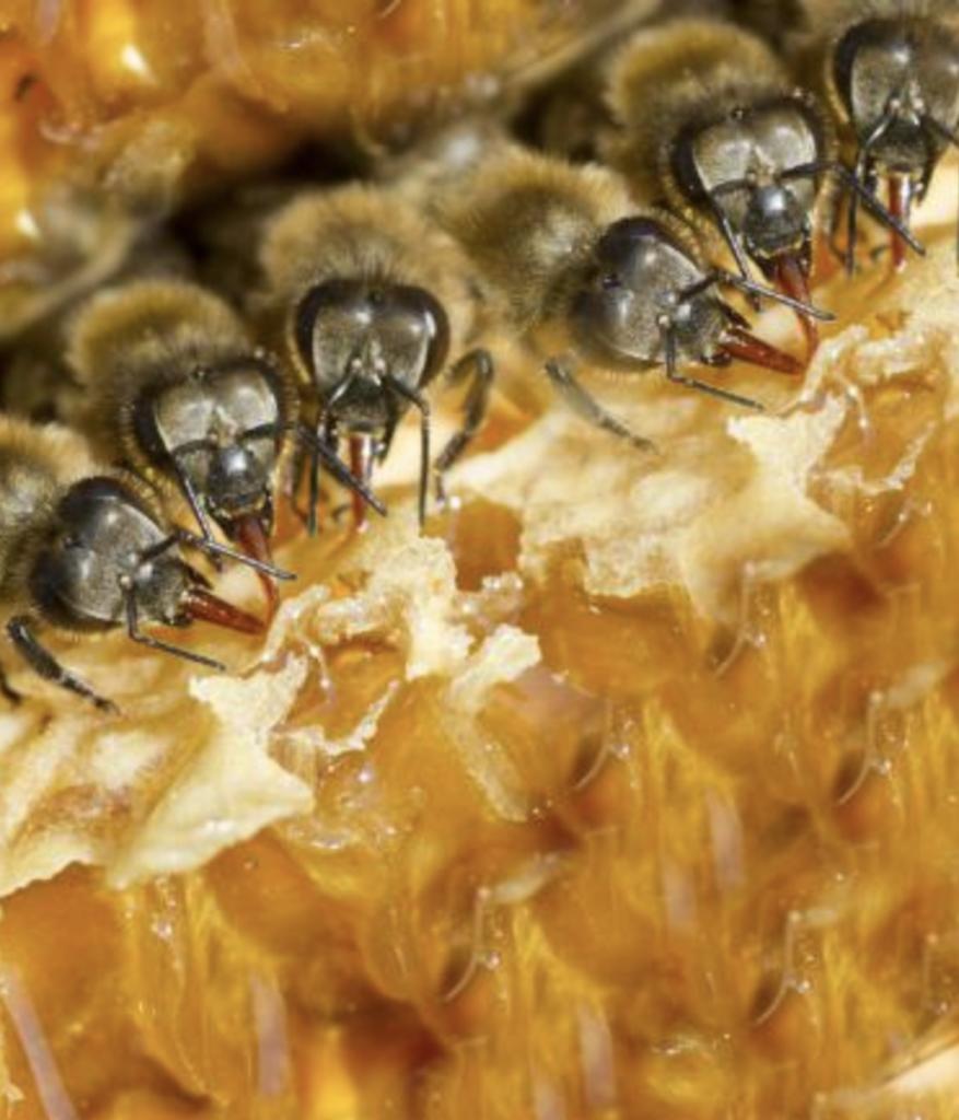 miel ruche abeille sauver les abeilles protégez les semaine du développement durable déco clematc