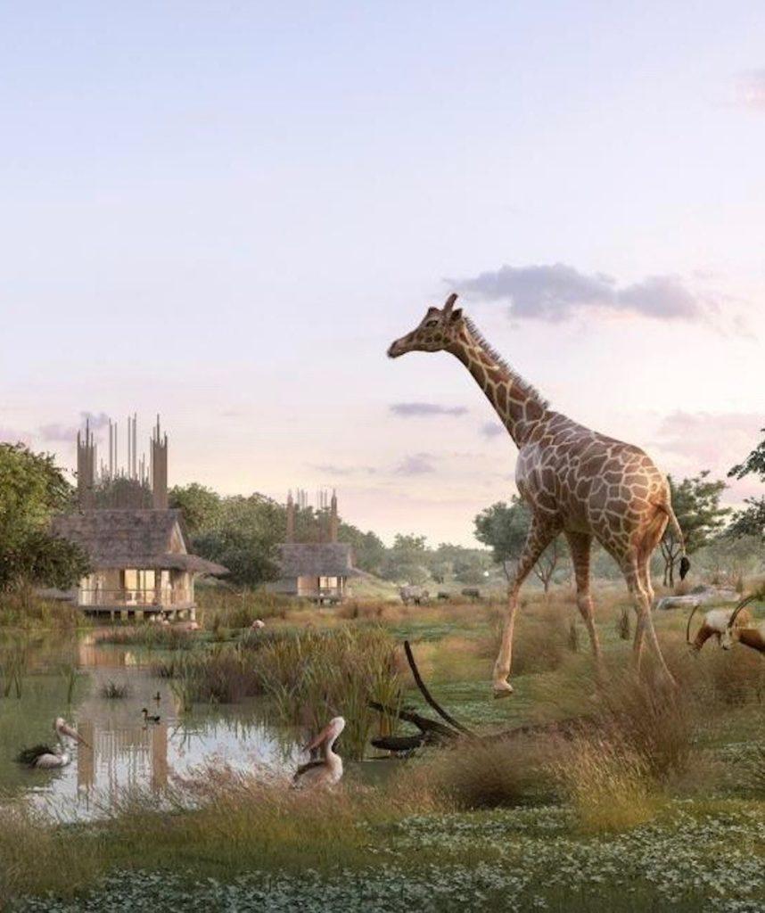 girafe animaux de la savane lodge vue sur la nature africaine clemaroundthecorner