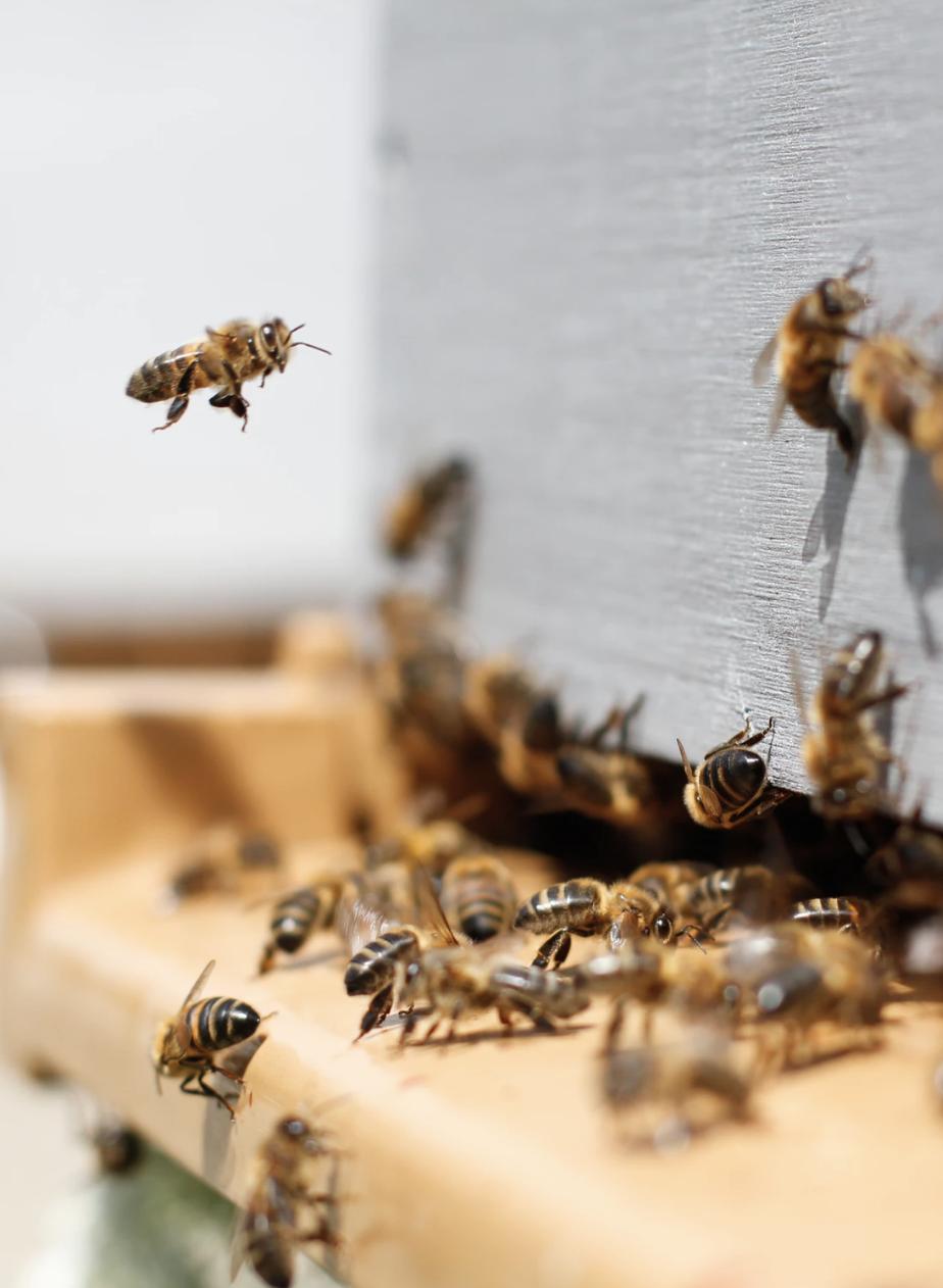 colonie d abeilles ruche entrée insecte pollinisateur miel - blog déco - clemaroundthecorner