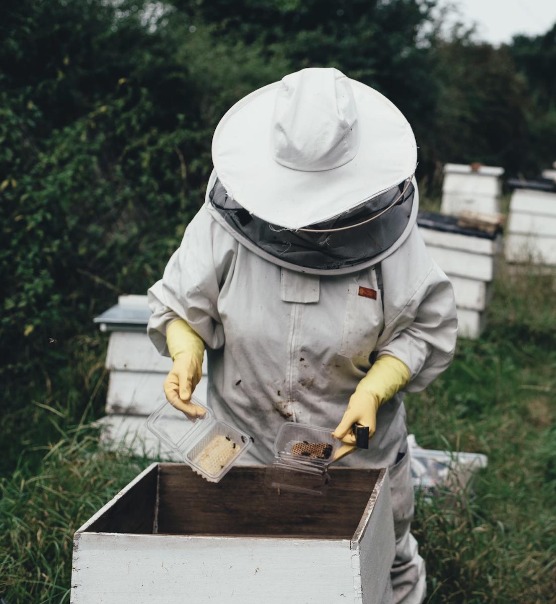 adopter des abeilles chez soi ruche ruchier nature - blog déco - clemaroundthecorner