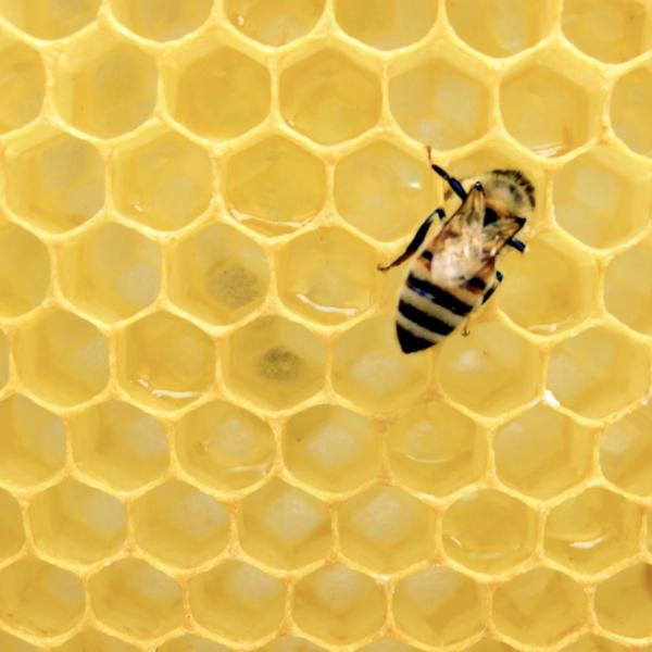 avoir une ruche chez soi sauver les abeilles ruche - blog déco - clemaroundthecorner